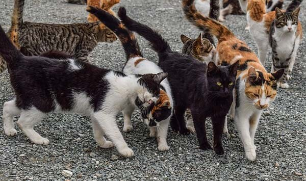 Feral cats sharing a group scent.
